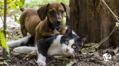 It's Prevention of Lyme Disease in Dogs Month and Heartworm Awareness Month. As spring comes into full swing, protect your fur family with natural products.