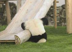 A clumsy panda falling off a slide.