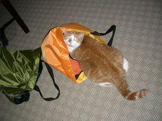 Romulus checks out the orange bag