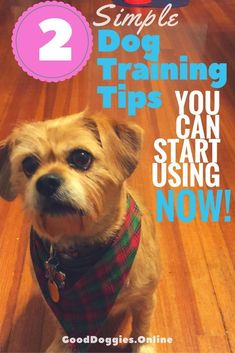Dog obedience doesn't have to be hard. Check out these easy dog and puppy training tips that you can use right away.