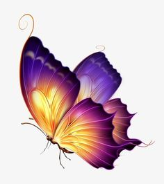 Butterfly Drawing, Butterfly Tattoo Designs, Butterfly Wallpaper, Purple Butterfly Tattoo, Butterfly Images, Butterfly Painting, Rainbow Butterfly, Butterfly Design, Photo Png