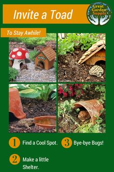 Do you want toads in your garden? With a few easy steps you can get these helpful, bug eating critters protecting your plants. How To Get Rid, How To Make, Garden Pests, Rodents, Toad, Pest Control, Plants, Planters, Plant