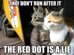 20 Cats and That Ultimate Prey.THE RED DOT! - LOLcats is the best place to find and submit funny cat memes and other silly cat materials to share with the world. We find the funny cats that make you LOL so that you don't have to. Funny Animal Pictures, Funny Animals, Cute Animals, Funniest Animals, Animal Fun, Animals Dog, Animal Pics, Crazy Cat Lady, Crazy Cats