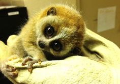 11 Endangered or Threatened Animals Just Born at a Zoo Near You | Mental Floss