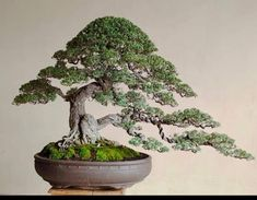 Bonsai Art, Plants, Style, Swag, Plant, Outfits, Planets