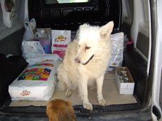 Eva ha già cominciato la nuova dieta di PRIMAVERA per cani di taglia piccola e media! http://www.petsplanet.it/it/cani/dieta-con-pollo-e-riso-per-cani-di-piccola-taglia-la-dieta-gustosa-con-ingredienti-a-basso-contenuto-di-colesterolo-da-fare--202.html