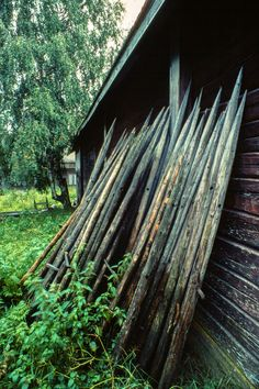 Nostalgia, Good Old Times, Ancient History, Lonely Planet, Denmark, Birch, Childhood Memories, Countryside, Norway