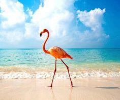 National Bird...Flamingo...Bahamas