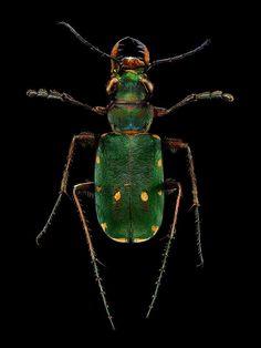 Des Photographies Macro composées de près de 10000 images montrent les Détails des Insectes (6)