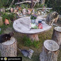 #garden #cat #green #landscape #like