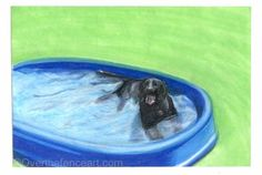Dog Art Card Black LABRADOR card,animal lover gift, gift for dog lovers, Black Lab cools off in pool by overthefenceart on Etsy Gifts For Pet Lovers, Dog Gifts, Gift For Lover, Dog Lovers, Dog Cards, Dog Birthday, Black Labrador, Christmas Dog