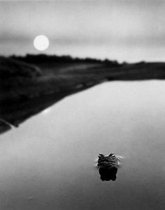 Ristisaari, Finland (Frog in Water) 1974 Gelatin Silver Print
