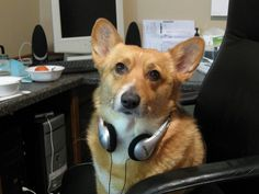 Millie is great help with KFDI morning radio duties