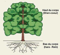 arbre-racine2_gris.jpg