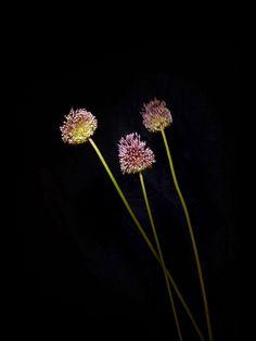 Flowerwork by Sarah Illenberger