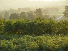 Visit the Morgan Orchard to pick a variety of different fruits within the beauty of the West Virginia mountains.
