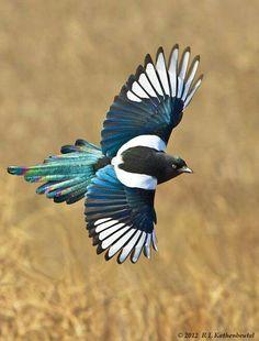 ¡#SomosLibres como un ave!