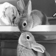 bunny kisses - Click image to find more Animals Pinterest pins
