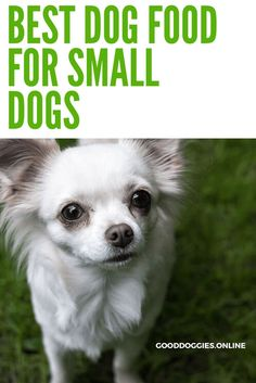 Best Dog Food For Small Dogs - Good Doggies Online