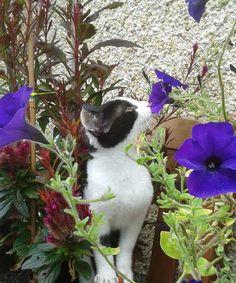 Panoramio - Photos by Micsa Bucknell Creatures, Cats, Nature, Photos, Animals, Beautiful, Gatos, Naturaleza, Animales
