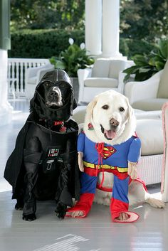 Darth Vader and Superman doggy costumes.  www.ultimatecostumeideas.com
