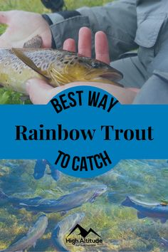 The more information you have in addition to knowing the top tips and techniques will help you land that Rainbow Trout. So, if you want that trophy Rainbow Trout then read on and learn the Best Way to Catch Rainbow Trout: Top 10 Fishing Tips. Trout Fishing Tips, Rainbow Trout, Best Fishing, Learning, Top, Studying, Teaching, Crop Shirt, Shirts