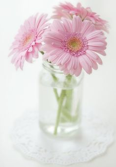 Gerberas, beautiful...