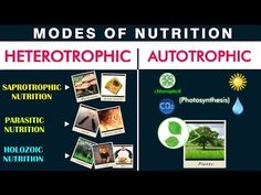 """Hello Friends, Check out our video on """" Nutrition and Modes of Nutrition"""" This Video covers : Humans depend on a balanced diet for their survival, but what a. Nutrition Guide, Health And Nutrition, Nutrition In Plants, Different Plants, Photosynthesis, Math Classroom, Balanced Diet, Biology, Lose Weight"""