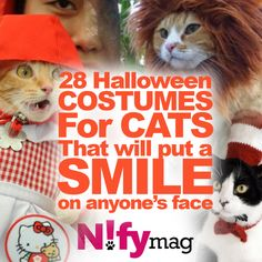 28 Halloween Costumes For Cats