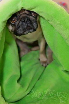 Kuschelsack für Hunde nähen, Anleitung für einen Kuschelsack
