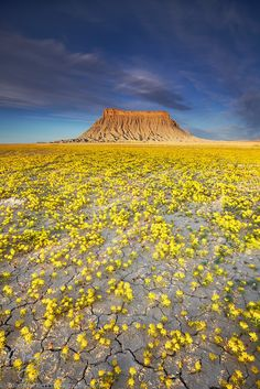 Factory Butte & Beeplant, Caineville, Utah. Photo by Adam Barker Photography
