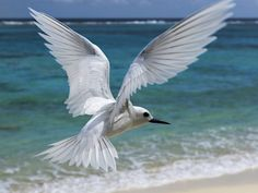 Image detail for -white birds wallpaper