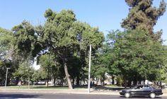Pza. Franklin. Santiago de Chile