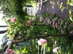 My former garden. Rosor. Roses.