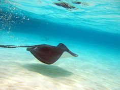 Grand Cayman Islands- and I actually swam with the stingrays