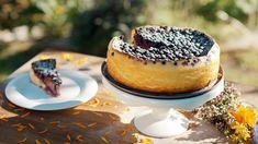 Tvarohový dort s borůvkami bez mouky — Recepty — Kouzelné bylinky — Česká televize