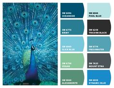 Jewel tone paint colors this weeks color palette jewel tones best Peacock Blue Paint, Peacock Color Scheme, Paint Color Schemes, Peacock Colors, Colour Pallette, Peacock Feathers, Color Combos, Peacock Bedroom, Peacock Decor