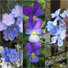 Herbář Plants, Plant, Planets