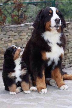 I love those dogs.