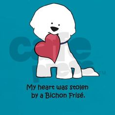 My heart is stolen by Bichon Frise on 2/8/11 <3 http://aguidetowhatsinsideyourbeautybag.blogspot.com/2013/12/2013s-naughty-and-nice-beauty-products.html