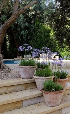 Garden Plans Agapanthus 'Navy Blue' in Pots, ♥♥♥ re pinned by .uk 'Navy Blue' in Pots, ♥♥♥ re pinned by .uk Garden Plans Agapanthus 'Navy Blue' in Pots, ♥♥♥ re pinned by .uk 'Navy Blue' in Pots, ♥♥♥ re pinned b. Back Gardens, Small Gardens, Outdoor Gardens, Outdoor Pots, Outdoor Potted Plants, Patio Plants, Rustic Gardens, Container Plants, Container Gardening