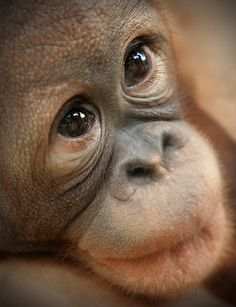 stop buying palm oil, save this angel