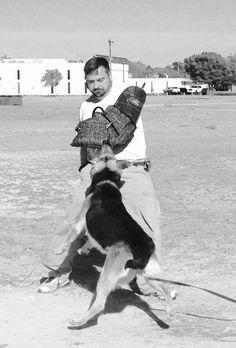 Personal protection training in Abilene, TX. VanBuren shepherds.