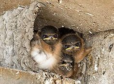 Info on safe materials to leave in your garden for birds at nesting time.