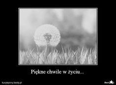 BESTY.pl - Piękne chwile w życiu...