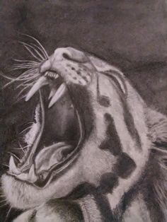 White tiger in graphite pencil drawing. Graphite, Pencil Drawings, At Least, Portraits, Artwork, Graffiti, Work Of Art, Head Shots, Portrait Paintings