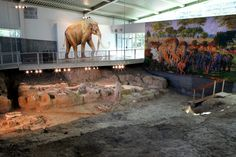 Dinosaurs, Mammoths, and Ancient Texans - Take a 100 million year trip through Central Texas -  Visit this site to find out more - www.prehistorictexas.com