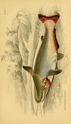 v. 39: Ichthyology v. 5 (Fishes of British Guiana, Part 1; Memoir Robert H. Schomburgk) - Ichthyology / - Biodiversity Heritage Library