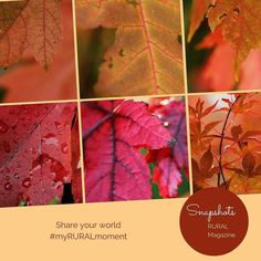 We're not in denial about the falling leaves oh no not us . . . . . http://ift.tt/2fikJxN Visit www.ruralmag.com a free online magazine for #midlife women. It's not where you live it's how.