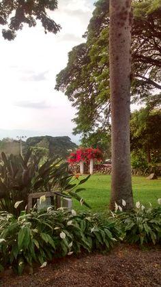 Hacienda El Paraiso - Valle del Cauca Country Girls, Plants, Nature, Colombia, Haciendas, Earth, Scenery, Plant, Cowgirls